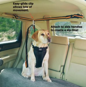 Buckle your dog up whenever you are driving. There are different forms of seat-belt harnesses for all different sizes and mobility.