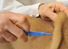 For long trips with your pets, consider getting them fitted with a microchip in case they get lost.