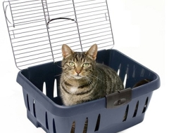 Be sure your pet's carrier is approved by the airline and will fasten securely for the duration of your travels.