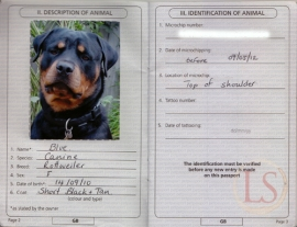 Traveling abroad may require you to have a pet passport. Check the US Embassy in the country you are traveling to for more information.
