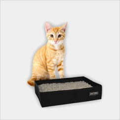 When traveling with your kitty, be sure to pack a portable litter box and get them acclimated to it before your trip.
