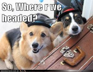 So Where are We Headed dogs