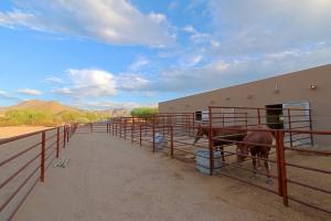 Horse Area 9